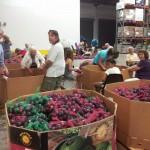 SD Food Bank Volunteer Night-August, 2014
